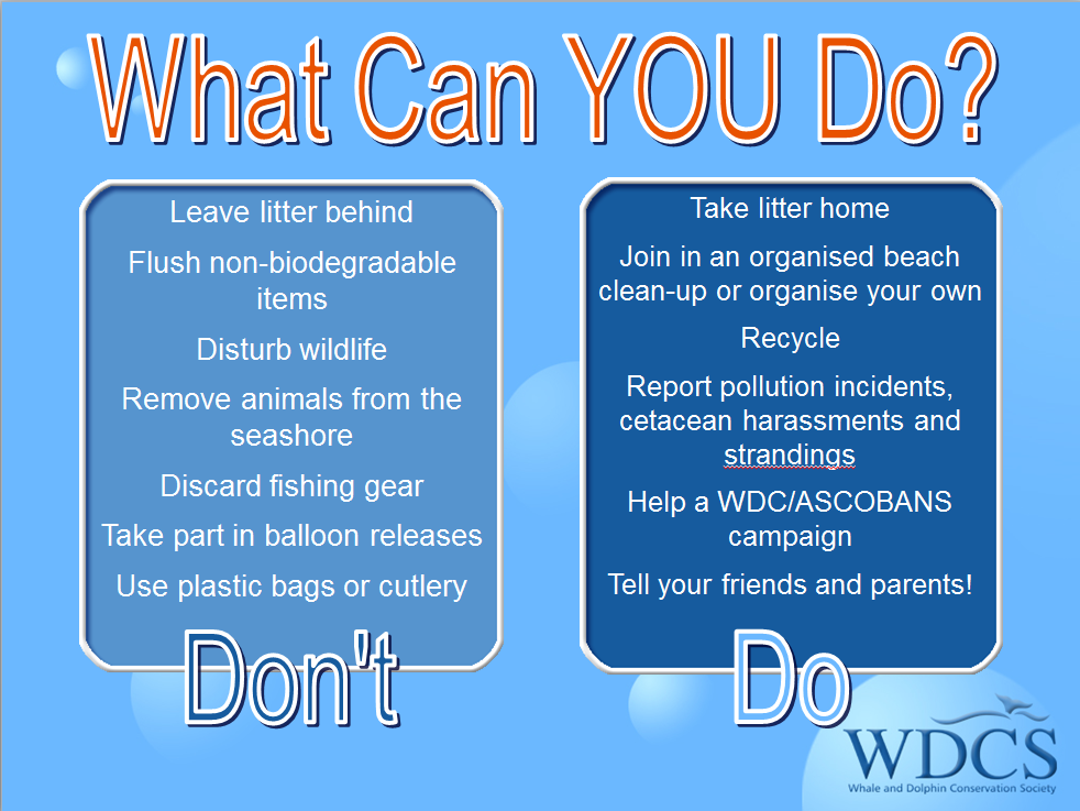 Get inspired by simple ideas on how to contribute to the conservation of our oceans and our favorite animals! © WDC